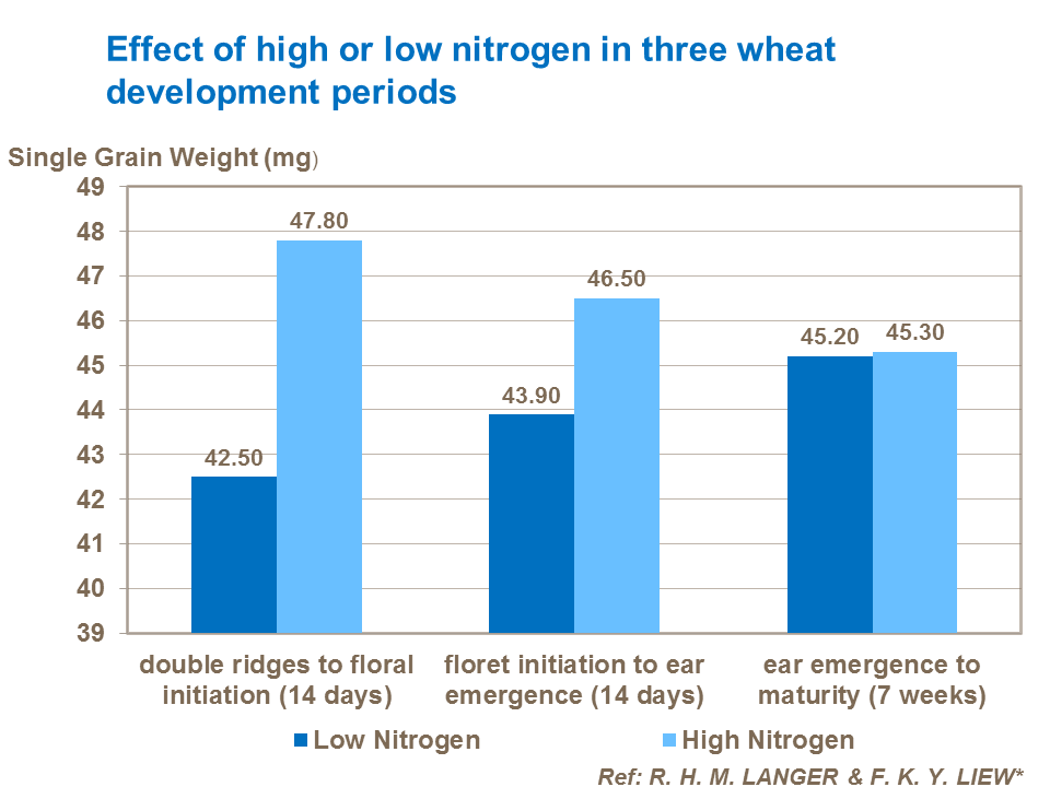 Effect of high or low nitrogen in three wheat development periods